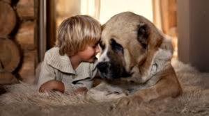 Сострадание к людям и животным
